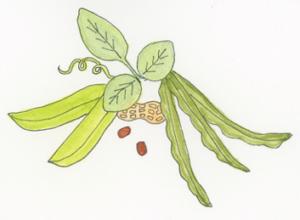 Facaceae-plant-family