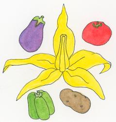 Solanaceae-plant-family