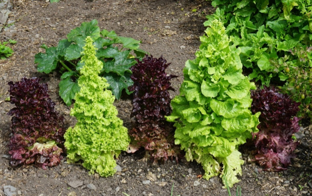 bolting-plants