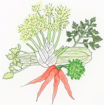 carrot-plant-family-illustration