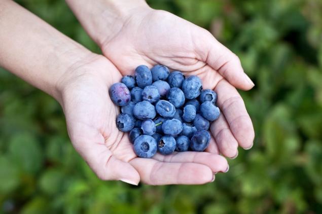handful-of-blueberries