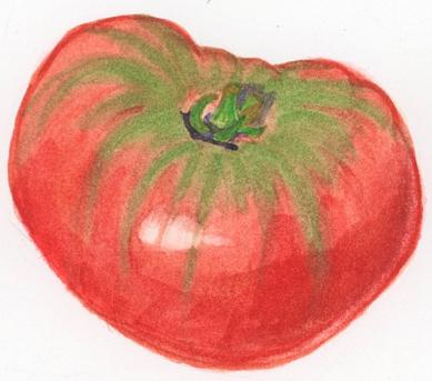 heirloom-tomato-illustration