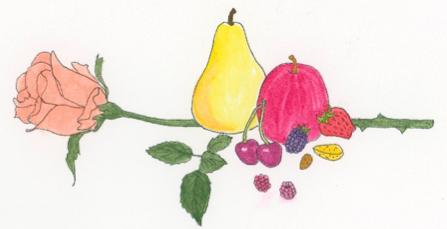 rose-plant-family-illustration
