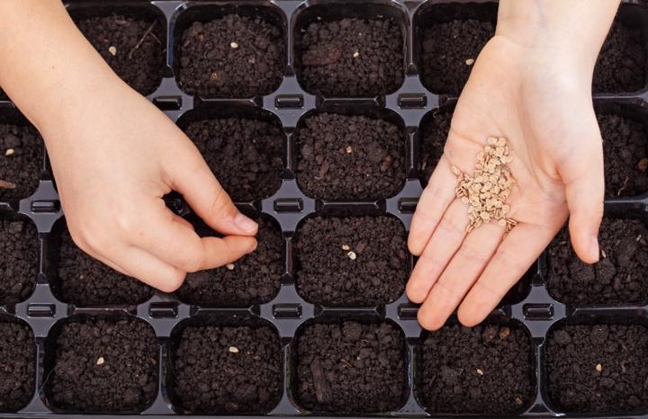 seed-germination-tray