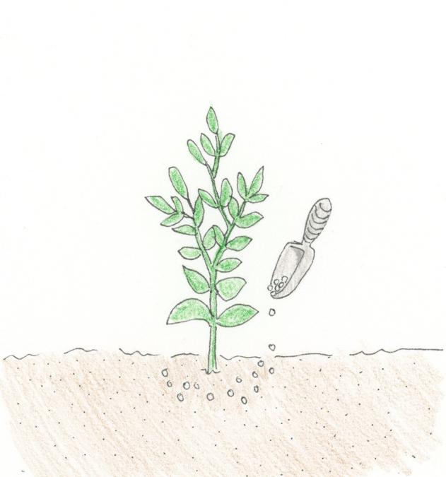 sidedressing-fertilization-illustration
