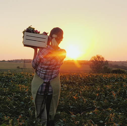 woman-carrying-box-in-field