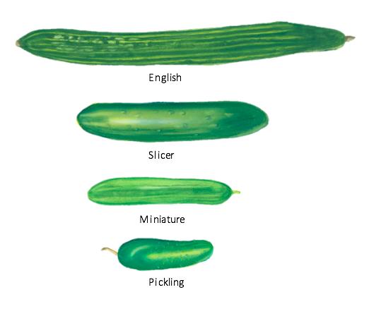 cucumber-types