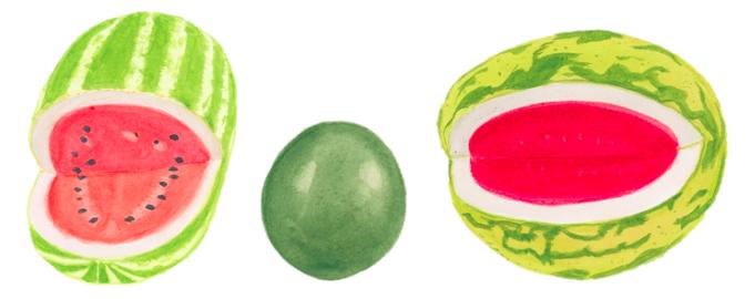 watermelon-main-types-illustration