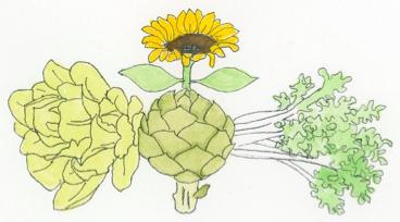 aster-or-sunflower-plant-family-illustration