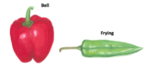 bell-and-frying-peppers