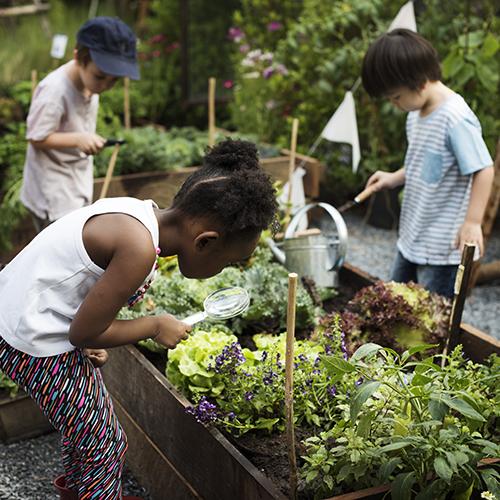 children-inspecting-garden