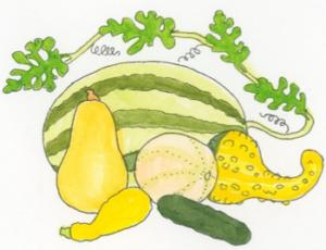 gourd-plant-family-illustration