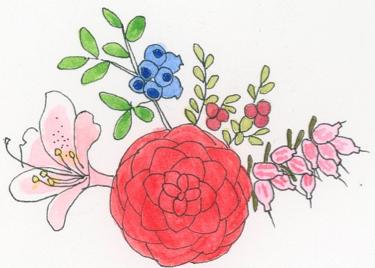heath-plant-family-illustration