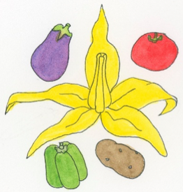 nightshade-plant-family-illustration