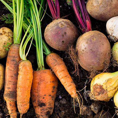 root-vegetables-laying-on-dirt