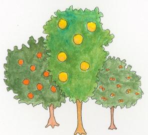 rue-plant-family-illustration