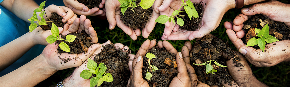 several_hands_holding_dirt_and_plant_sprouts