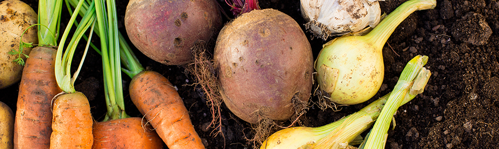 various_root_vegetables_laying_in_dirt