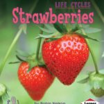 book_cover_Strawberries_Robin_Nelson